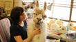 custom puppet - animatronic Llama
