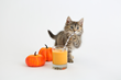 Turkey Day Tummy Aches Can Cause Double the Trouble for Pet Parents