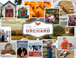 Community Orchard Memory Puzzle