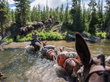 National Geographic Adventurers in Yellowstone