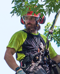 Matt Rinard, Tree Crew Leader with Seacoast Tree Care in NH.