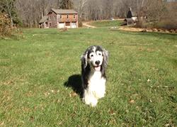 Morgan 9/11 SAR Dog
