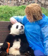 WestChinaGo Travel Updated Their Most Popular ChengDu Tour with DuJiangYan Panda Volunteer Program and ChengDu Panda Holding