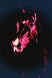Stallion in Neon
