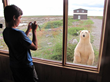 Curious polar bear at the window. Seal River Heritage Lodge.