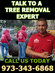 Professional Tree Service Company in NJ