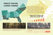 New Infographic from Dogwood Alliance Shows How Southern US Forests Are Fueling Climate Change