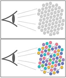 Ethnocentrism results when members of a group view members of another group as interchangeable (top). In contrast, higher mobility results in reduced ethnocentric behavior (bottom). Credit: Dana Nau