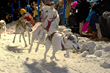 Jackson Hole WinterFest Outdoor Festival Mushes Out of Jackson Town Square with New Sled Dog Race Start