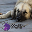 Old Savannah Insurance Agency Joins Coastal Pet Rescue to Launch Charity Effort Aimed at Saving Abused and Neglected Animals in Eastern Georgia