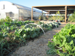 New Degree Program Prepares Students for Careers in Sustainable Agriculture