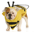 Beehive-eating dog a stinging reminder of pet insurance importance