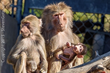 Oakland Zoo Receives Bundle of Baboons