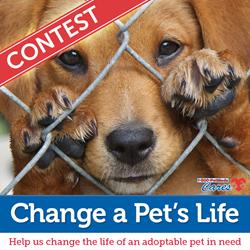 1-800-PetMeds Change a Pet's Life Contest