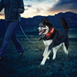 Play More, Worry Less: Nite Ize Introduces Nite Dawg LED Dog Collar