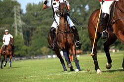 Polo in La Quinta