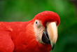 California's Premier Wholesale Exotic Bird Expo!