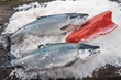 Alaska's Copper River Salmon Season Launches in mid-May