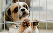 More Than 100 U.S. Communities Have Banned Retail Sale of Commercially Bred Puppies and Kittens - Las Vegas Is Latest City to Pass Progressive Ordinance