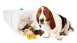 Dog Behavior Expert Advises, Don't Blame the Family Dog if He Needs Better Manners
