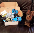 Pet Fashion Surprise Box that's uniquely curated for your furry friends.