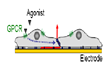 GPCR Mediated Signal Transduction in Endothelial Cells