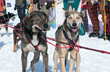 Jackson Hole WinterFest Announces 19 Days of Fun-in-the-Snow Activities in Jackson, Wyoming