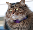 The PetPace wearable tech fits cats and dogs as small as 8 lb.