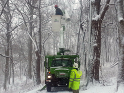 Giroud Tree and Lawn crew cleans up trees damaged by heavy snow and ice.  Safety tips help prepare Philadelphia homeowners for Winter Storm Jonas