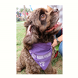 Mark Jameson Insurance Agency Continues Community Enrichment Program by Fundraising for the American Cancer Society Bark for Life Event