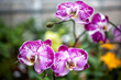 Indianapolis Museum of Art hosts stunning orchid exhibition