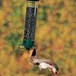 Deter Squirrels with Droll Yankees' Bird Feeder Squirrel Proofing Tips