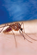 Insect Shield Protects against Mosquitoes that can carry Zika