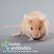 Fusion Antibodies Featured In European Biopharmaceutical Review