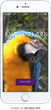 Oakland Zoo Launches New App: Now Available on the Apple App Store and Google Play