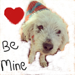 Sponsor an Indian Dog and Feel the Love this Valentine's Day