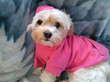 All Deziner Dog Apparel comes in blue or pink