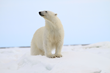 Expedition Travel Trio Announces Partnership with The Nature Conservancy