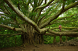 Four Seasons Resort Maui Unforgettable Events series