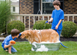 Pampered Pet Bath is a premium pet invention for dogs!