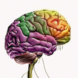 Mastering Rehab Solutions for the Complexities of Concussions