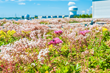 Green Roof Stands Up to Violent Storms and Near Hurricane Winds