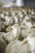 Responsible Wool Standard Stakeholder Review Launches