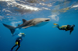 It's Time To Book For Belize's Unique Whale Shark Adventures