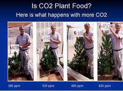 Higher levels of CO2 result in increased rates of plant growth