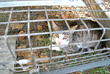Alley Cat Rescue calls on Australian municipality to reverse community cat bounty