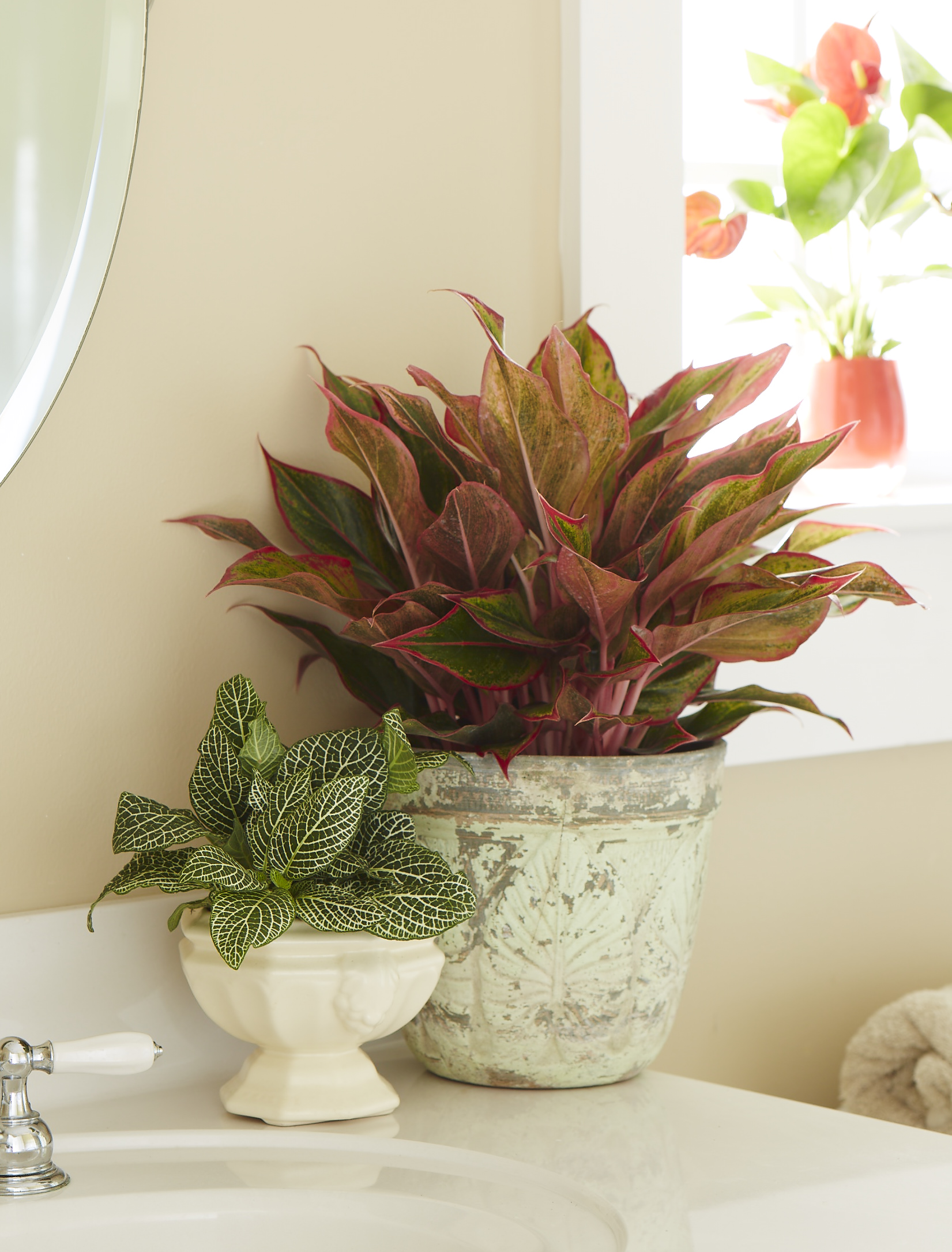 Houseplants From Costa Farms Fit Every Personality