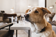 Buddy, the dog with a penchant for fine fabrics, a new addition to the WRJ Design team, merited a Hunt X Gather post that also spread the word about a worthy Jackson nonprofit's canine adoption event.