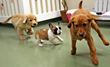 Puppies Get the Royal Treatment at Morris Animal Inn with New Programs and Amenities Designed to Give Pups a Head Start in Life