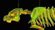 The resulting pointcloud 3-D model of MOSI's manatee, created with LiDAR technology. (USF CVAST image)